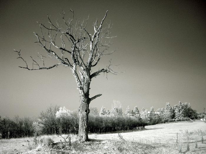 Дървото | Author Milen Dimitrov - terminator | PHOTO FORUM