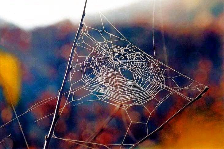 Паяк плете сноп лъчи... | Author vokobo  - VoKoBo | PHOTO FORUM