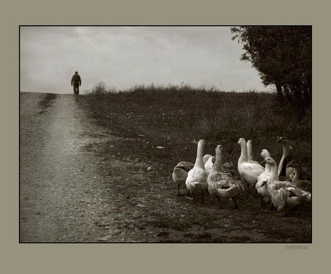 ... Х О Р И З О Н Т И ... | Author Нели Кръстева - niagara | PHOTO FORUM