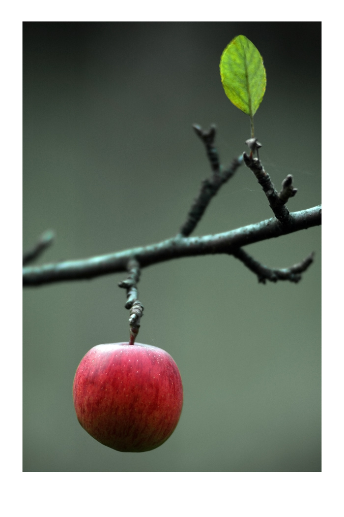 Red&Green | Author Chavdar Chernev - bard | PHOTO FORUM