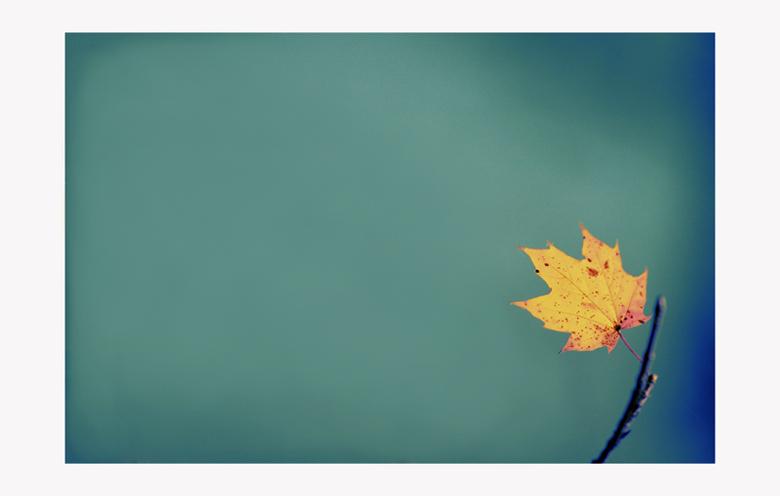 ...от есента | Author Chavdar Chernev - bard | PHOTO FORUM