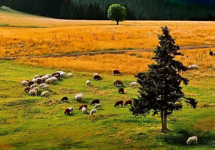 Photo in Nature | Author Aleksandar Ivanov - masteral | PHOTO FORUM