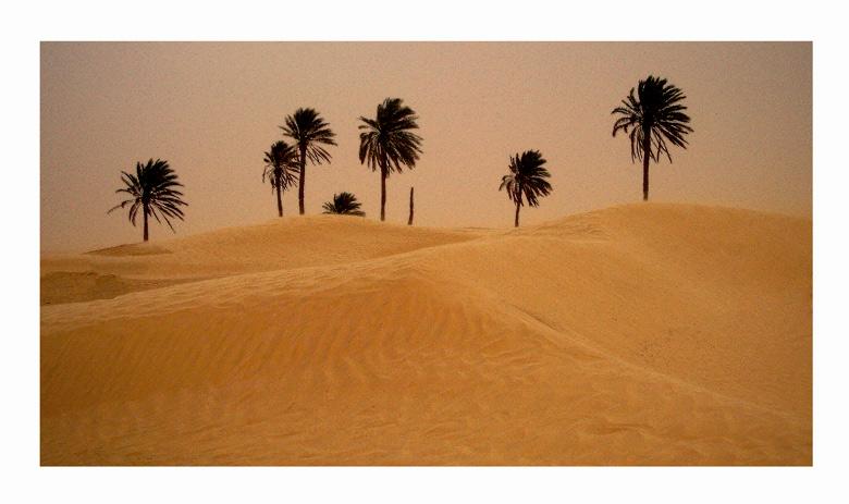 Там, зад дюните ... | Author Кристиян Кирилов - KrisoK | PHOTO FORUM