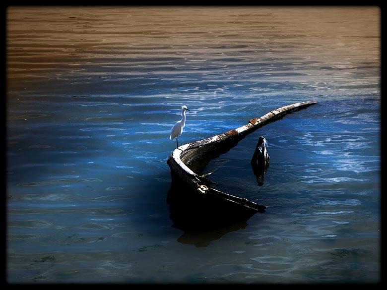 пилето, което потопи кораба   Author viktor petkov - exit   PHOTO FORUM