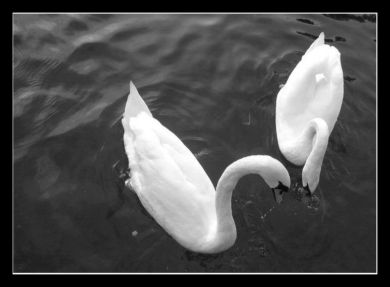 Любов и нежност...