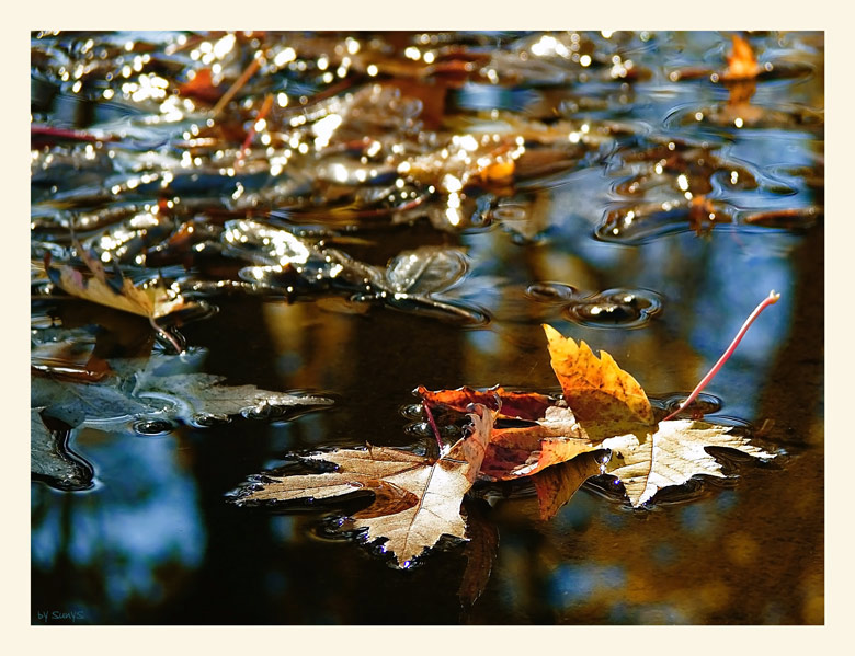 Photo in Nature | Author Suny Naumova - Suny_s | PHOTO FORUM