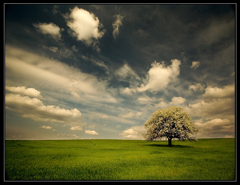 пролетна круша