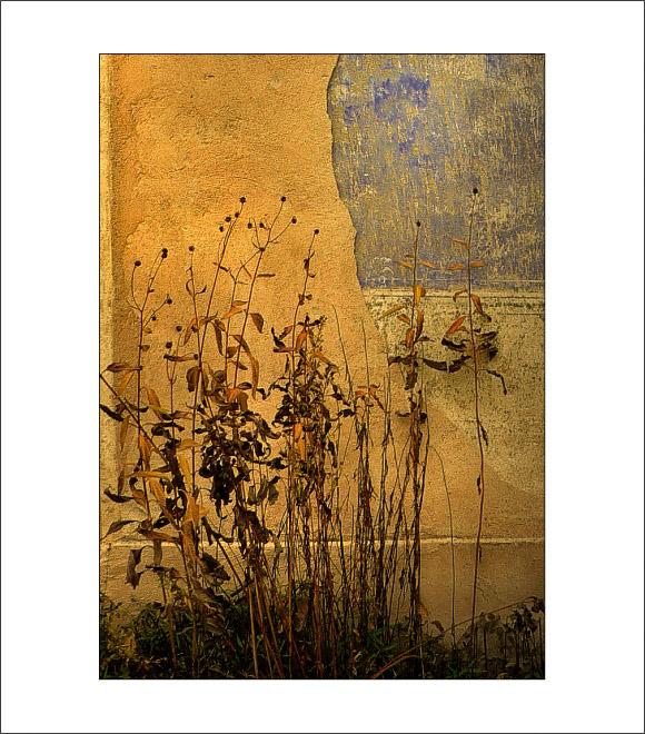 warm herbaged stucco harmony | Author mrblond | PHOTO FORUM