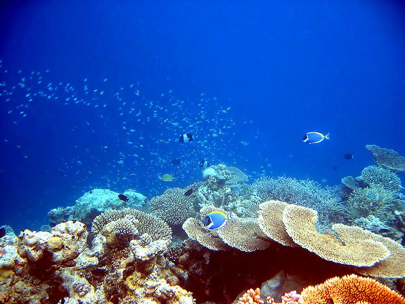 2-3 корала и няколко рибки | Author Evil_AVI | PHOTO FORUM