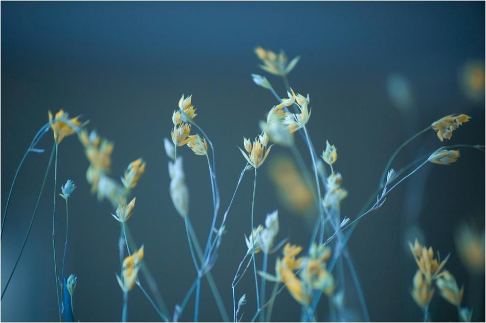 Blue & Yellow | Author Милен Танев - nikonnfans | PHOTO FORUM