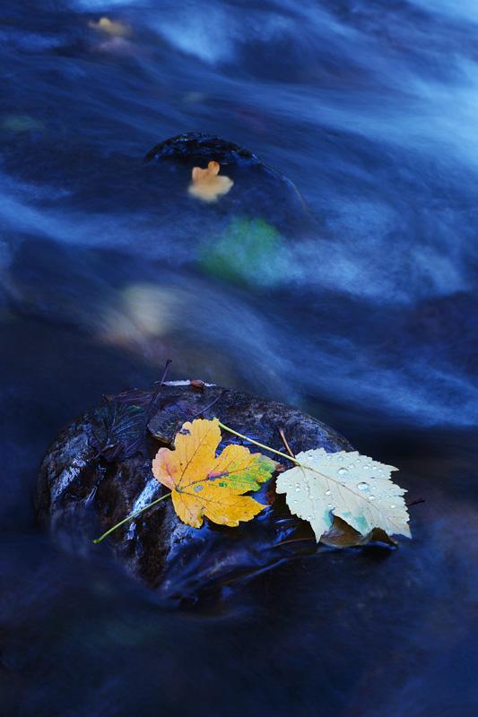 С цвят на мастило   Author Petar Krusev - Kart   PHOTO FORUM