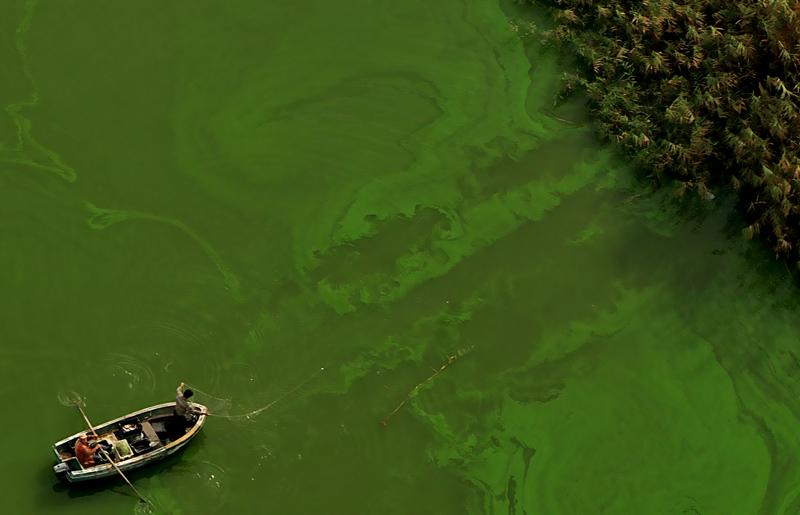 Swamp Thing | Author Viktor Nalbantov - vickie | PHOTO FORUM