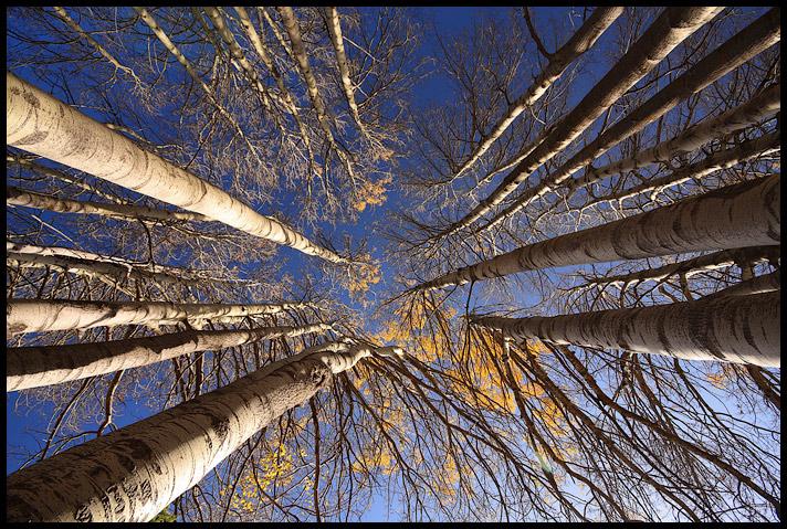 Photo in Nature | Author Pencho Chukov - chukov | PHOTO FORUM