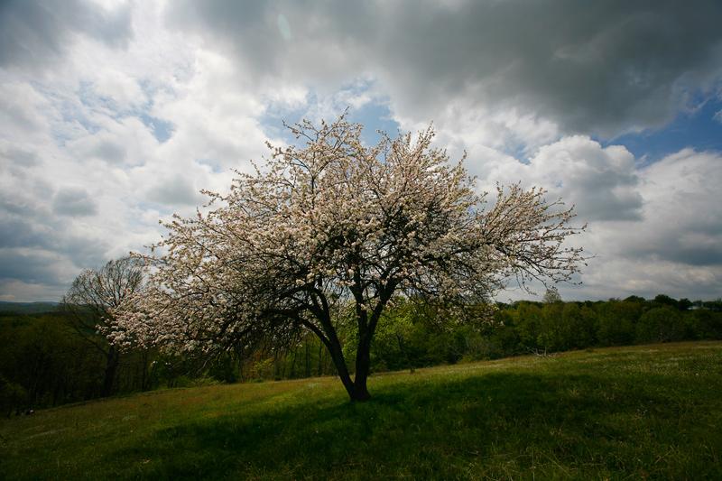 Photo in Nature | Author Пламен Джаджев - PolarBear | PHOTO FORUM