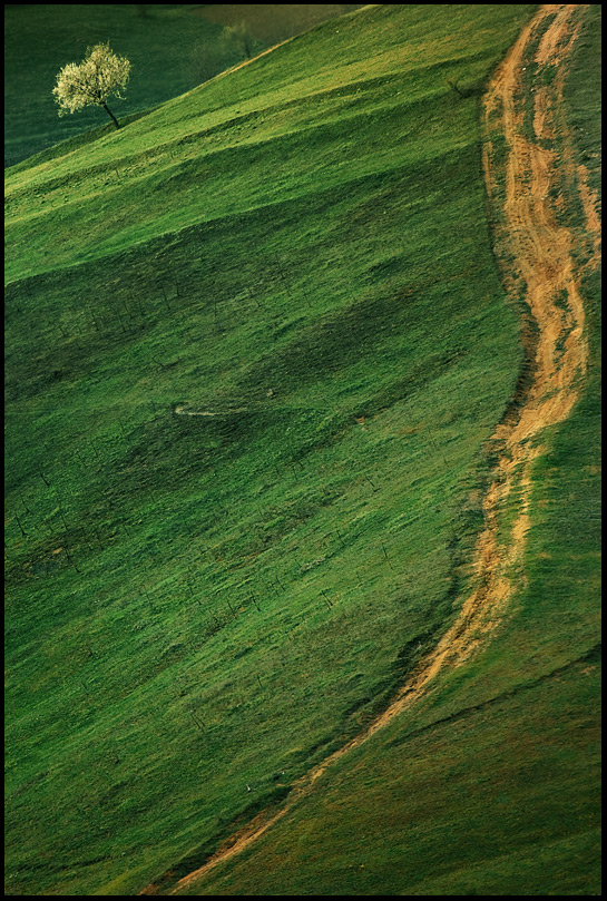 Цветовете на Родопа | Author Aleksandar Ivanov - masteral | PHOTO FORUM