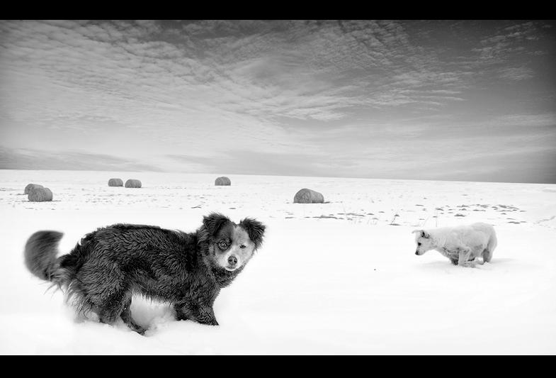 *** | Author Georgi Argirov - Argo | PHOTO FORUM