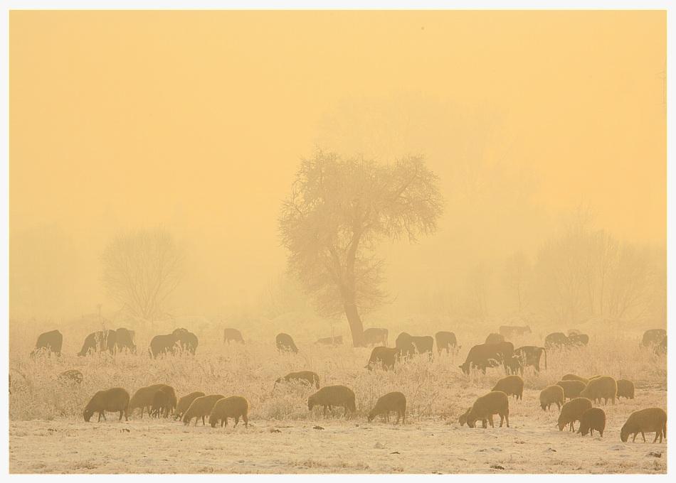 скреж и мъгла   Author valery hristov - taurus13   PHOTO FORUM