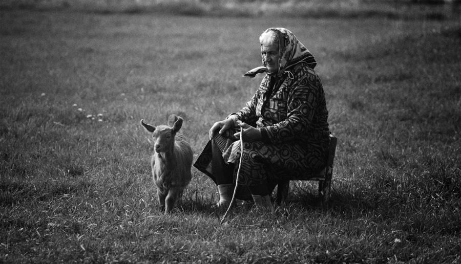 Photo in Daily round | Author shushulka | PHOTO FORUM