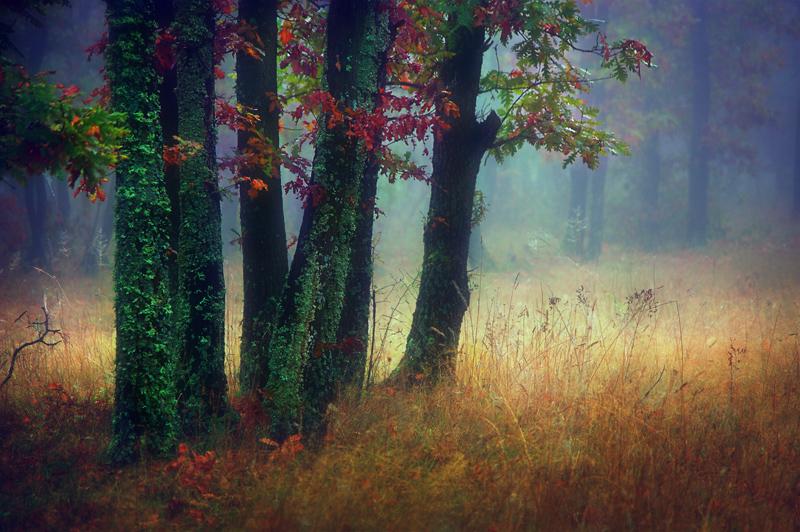 Цветни настроения | Author Жана Топчиева - janini | PHOTO FORUM