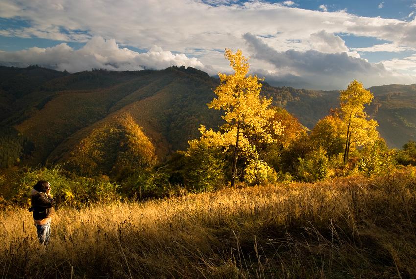 Вечер гората със залеза се люби пурпурно чиста   Author Jordanka Welichkova - anchi   PHOTO FORUM