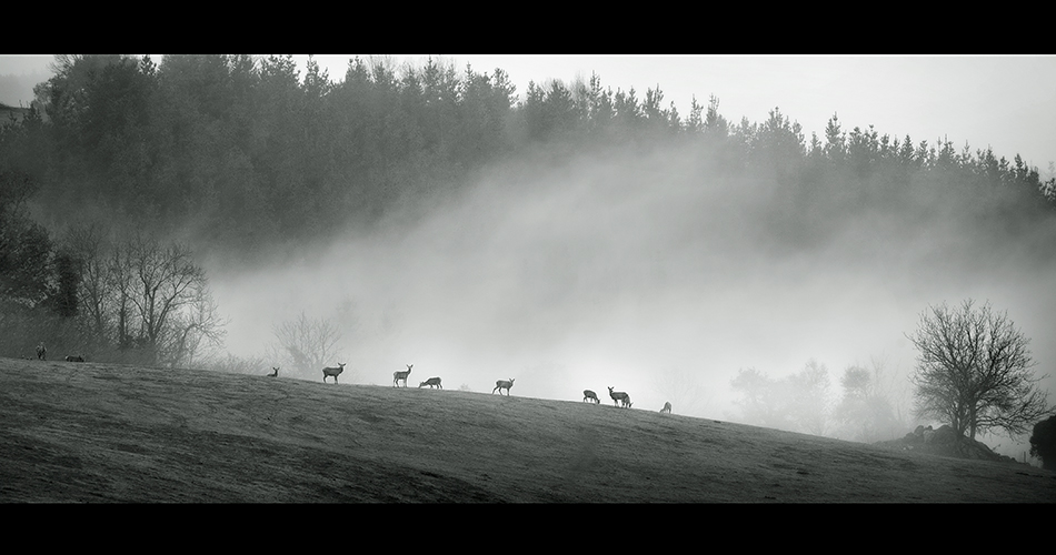 Photo in Nature | Author IPe  - Argazki | PHOTO FORUM