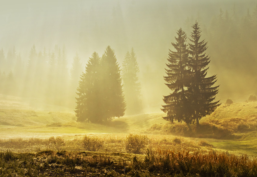 Утро | Author Petar Krusev - Kart | PHOTO FORUM