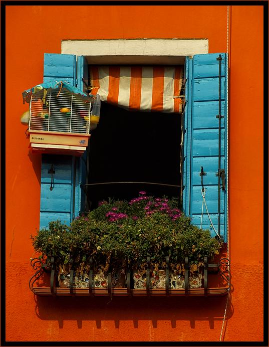 Un canarino sopra la finestra photo forum - La finestra album ...