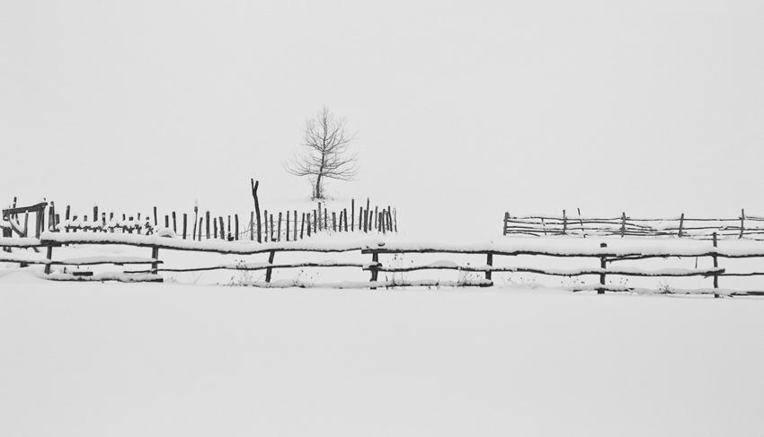 бяло и черно   Author Jordanka Welichkova - anchi   PHOTO FORUM