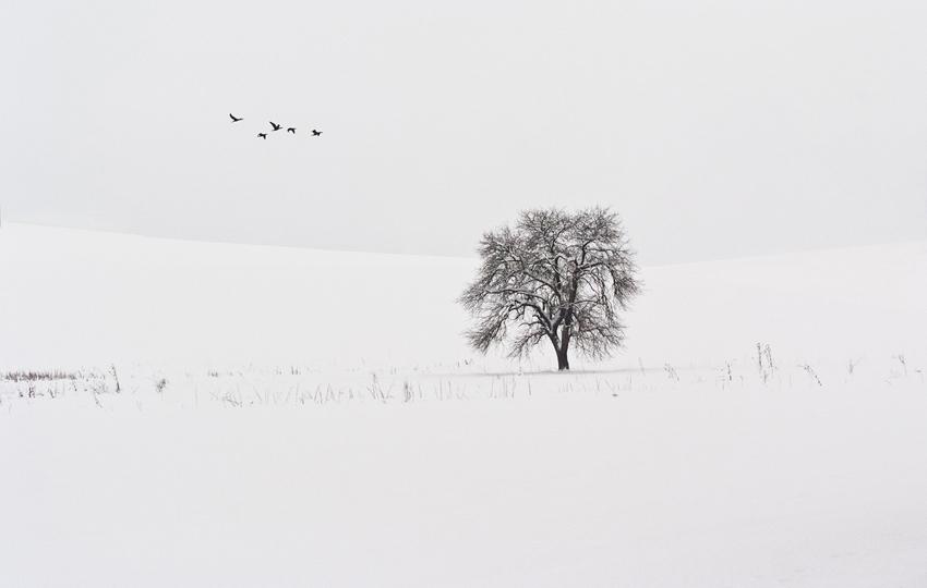 Бяла тишина   Author Jordanka Welichkova - anchi   PHOTO FORUM