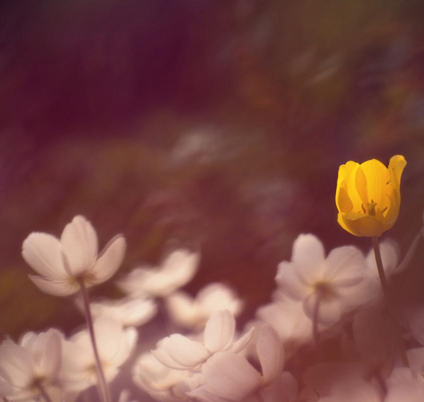 Photo in Nature | Author Nikolai  - charly74 | PHOTO FORUM