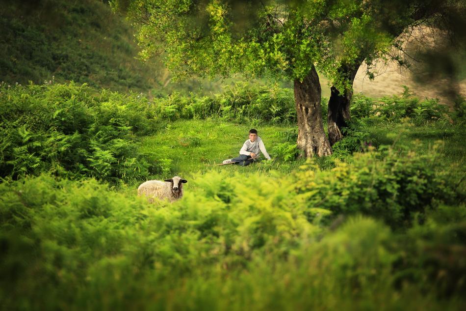Сами в гората | Author Велико Карачивиев - ikoveliko | PHOTO FORUM