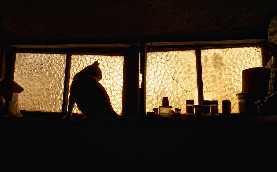 Крикит в килера   Author Ivan Panayotov - Lavcheto   PHOTO FORUM