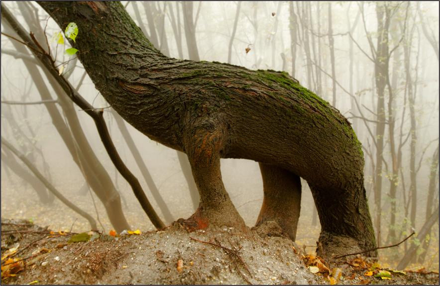 На Витоша..динозаврите | Author Богдан Стойко - stb | PHOTO FORUM