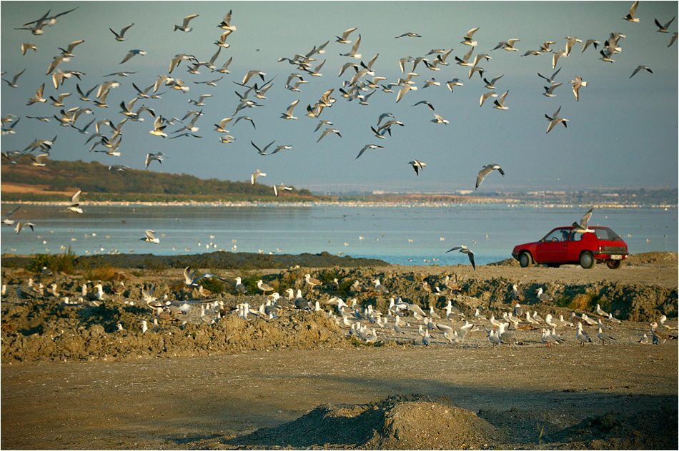 Птичи свят | Author Стефан Кунчев - nafets | PHOTO FORUM