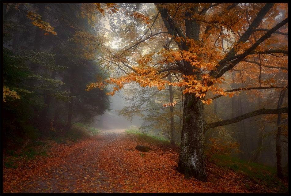 Есен, есен, умиращ сезон....... | Author Svetoslav Georgiev - Svetlio70 | PHOTO FORUM