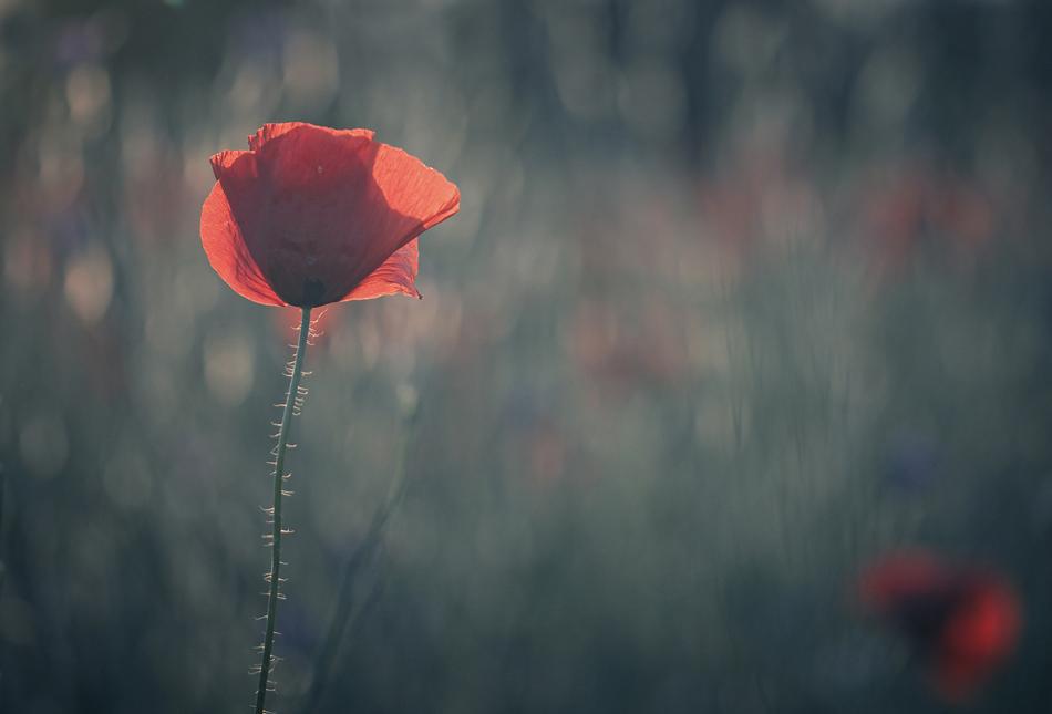 *** | Author Христина Видева - burberry | PHOTO FORUM