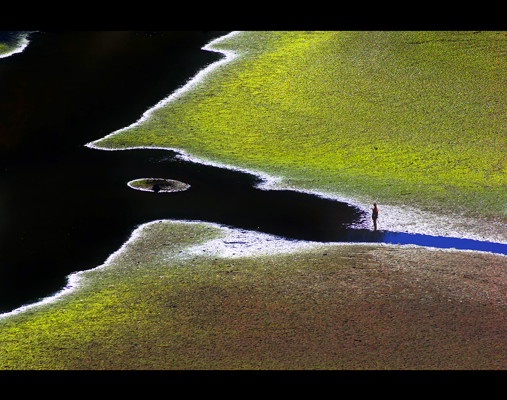 Цветовете на Родопа   Author Aleksandar Ivanov - masteral   PHOTO FORUM