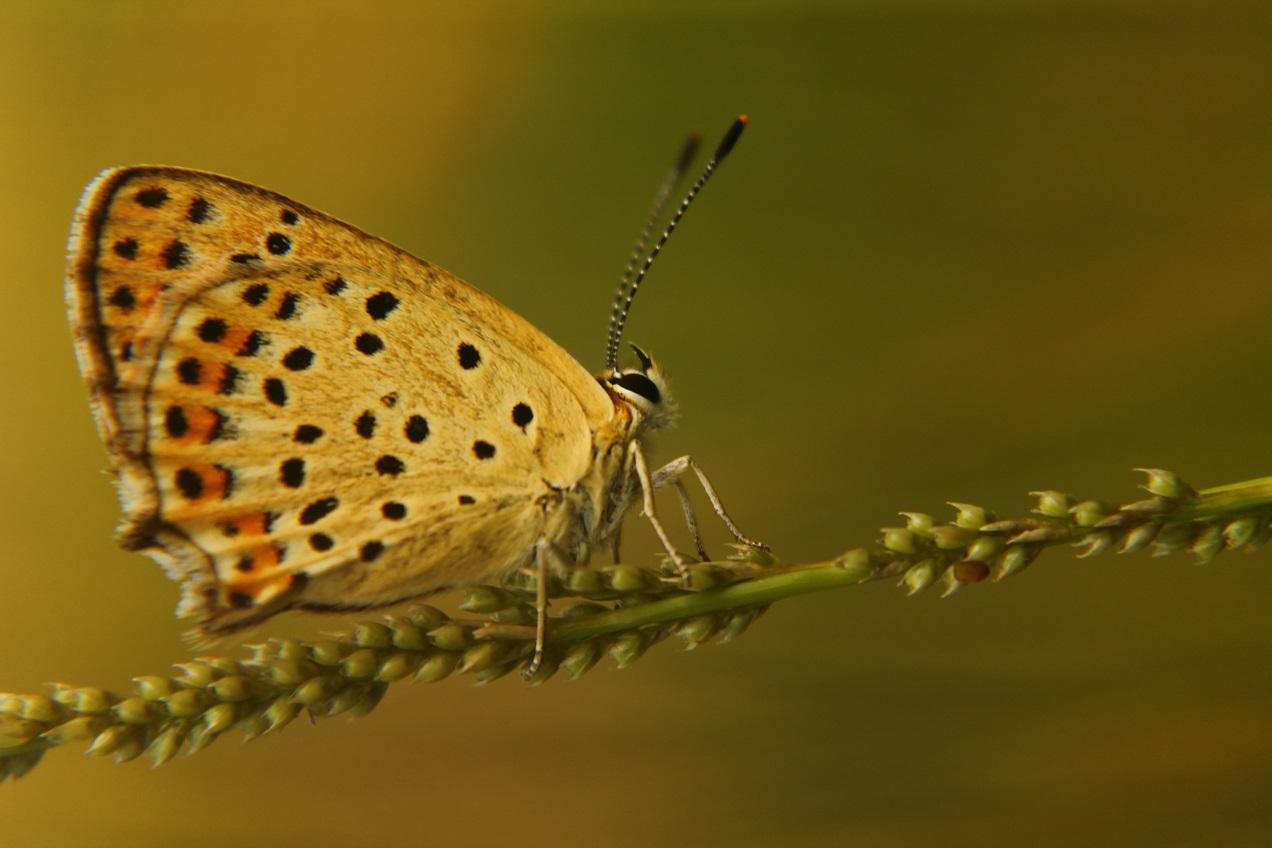Пеперудена красота | Author iliya levkov - levkov87 | PHOTO FORUM