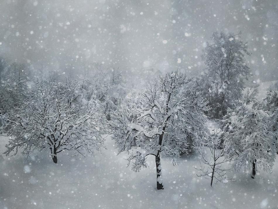 Зимно | Author Rayna Ivanova - r_iva | PHOTO FORUM