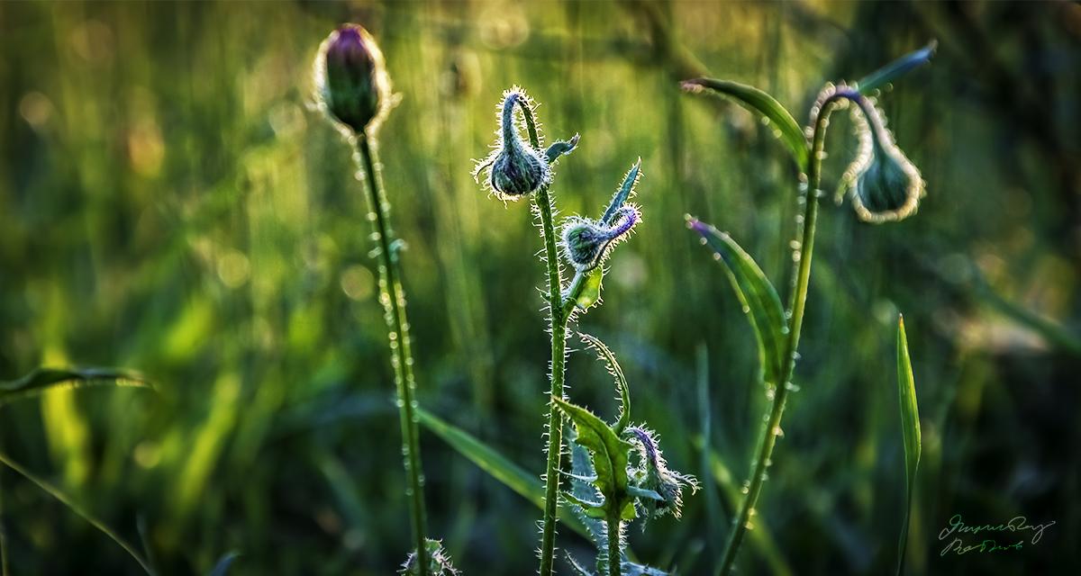 Photo in Nature | Author [3-days annonimity] | PHOTO FORUM
