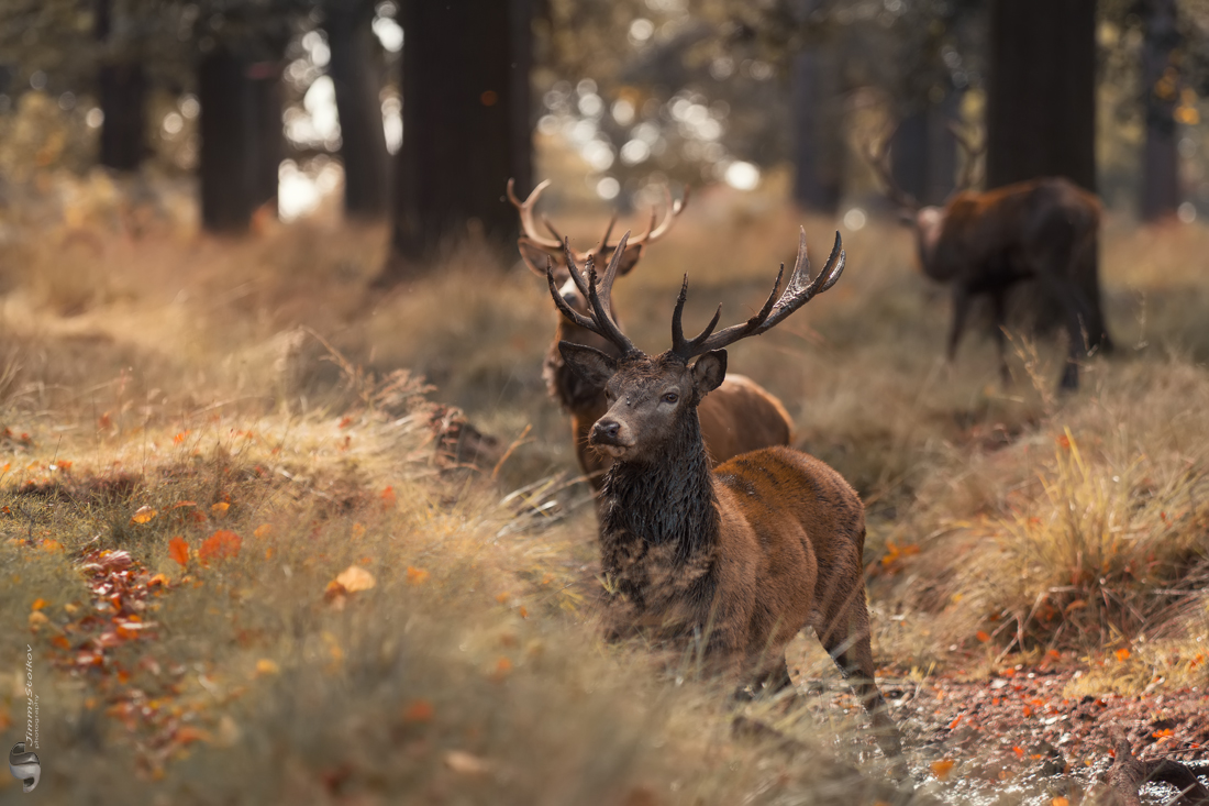 Photo in Wild life | Author Jimmy Stoikov - JimmyStoikov | PHOTO FORUM