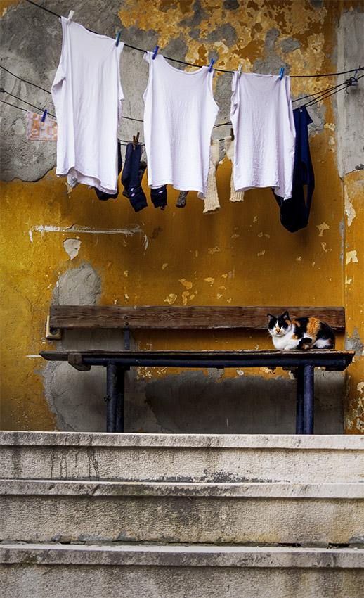 .. котешко пладне ... | Author Angelina Shishmanidova - angelina_sh | PHOTO FORUM