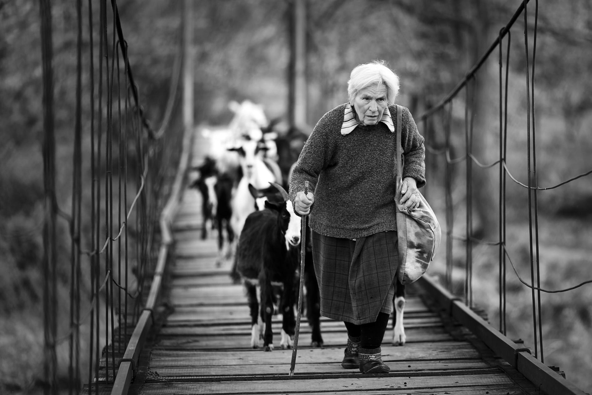 Пастирка