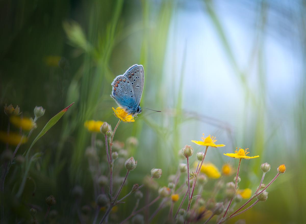 В малкия свят на тревите2 | Author АДЕЛИНА ДЕВЕТАКОВА - addi999 | PHOTO FORUM