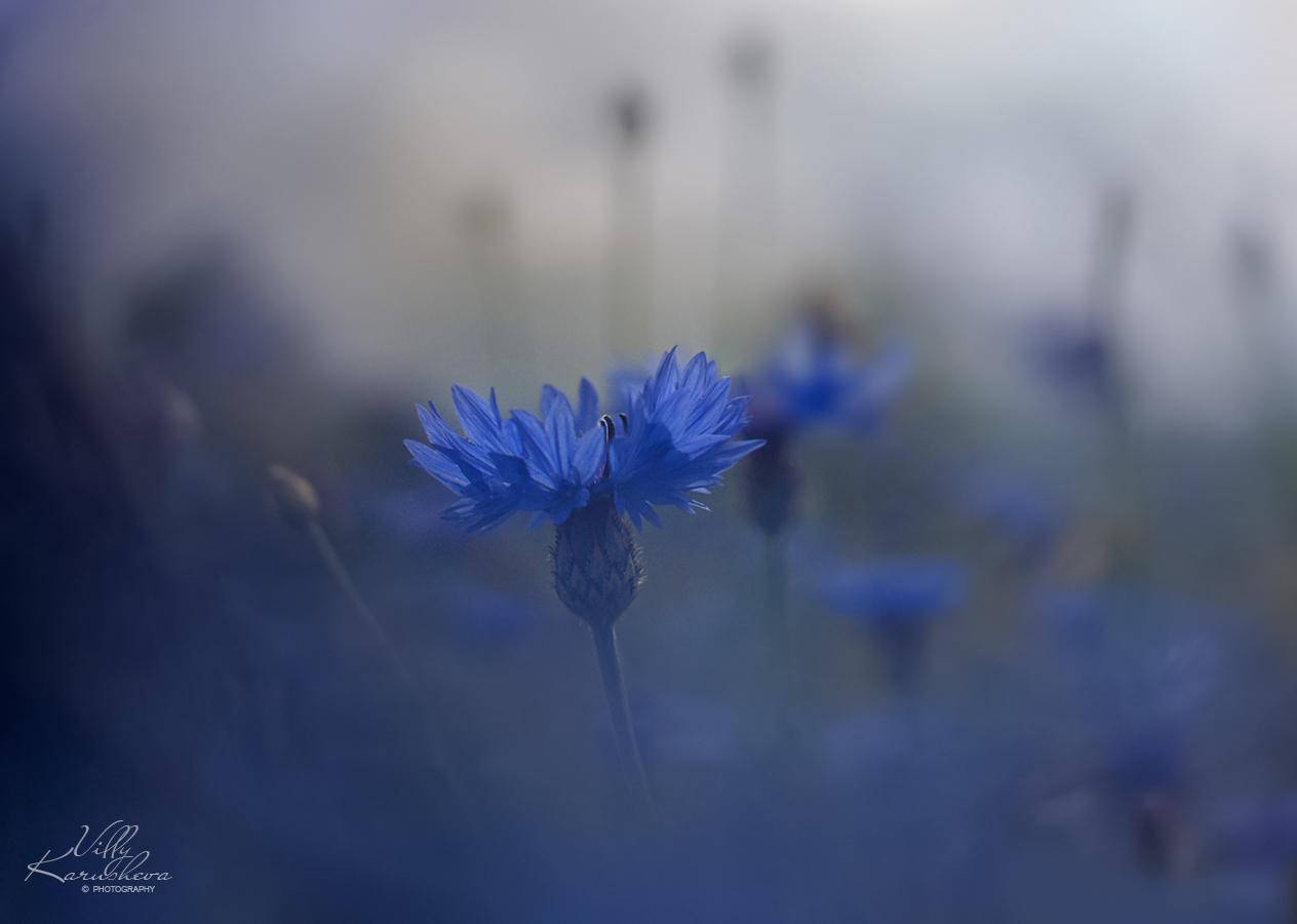 Photo in Nature | Author Villy Karusheva - vmk | PHOTO FORUM