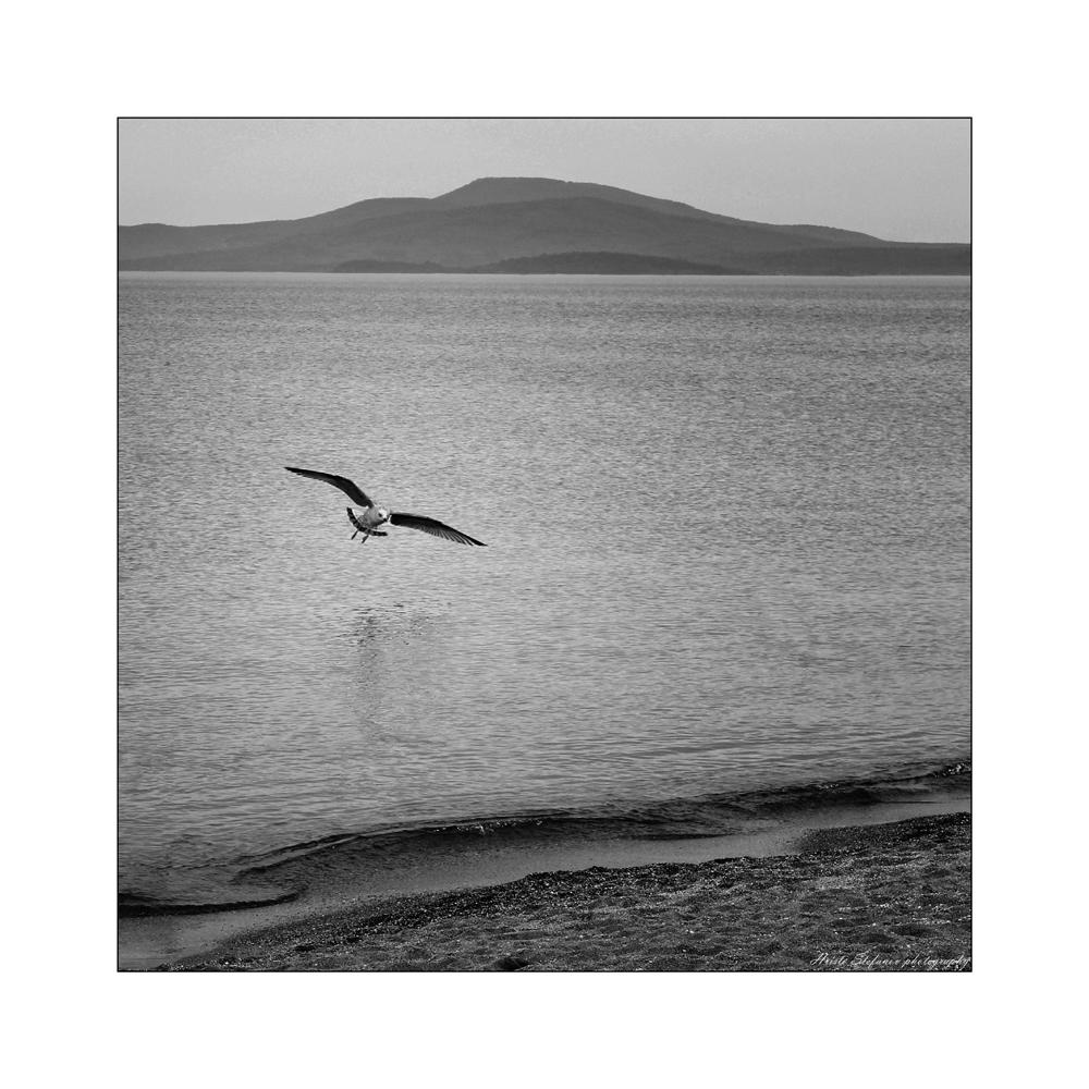 А животът е птица...   Author Hristo Stefanov - ico10   PHOTO FORUM