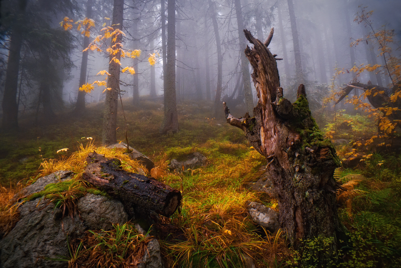 Photo in Nature | Author Svetoslav Georgiev - Svetlio70 | PHOTO FORUM