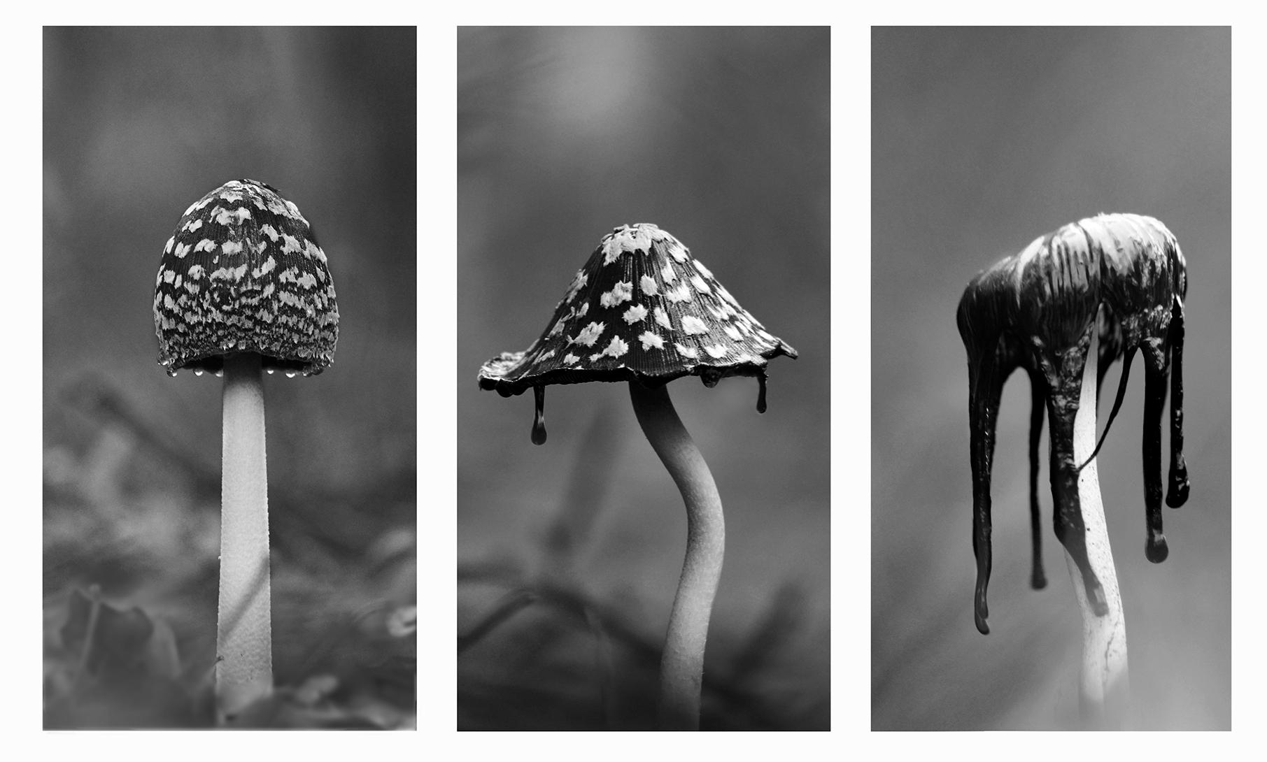 Житието на гъбката | Author Petar Belev - nislon | PHOTO FORUM