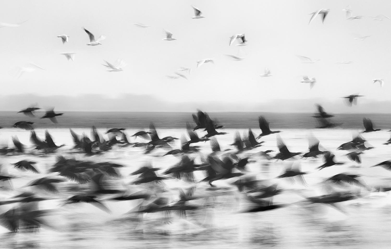 Птиците | Author Aleksandar Ivanov - masteral | PHOTO FORUM