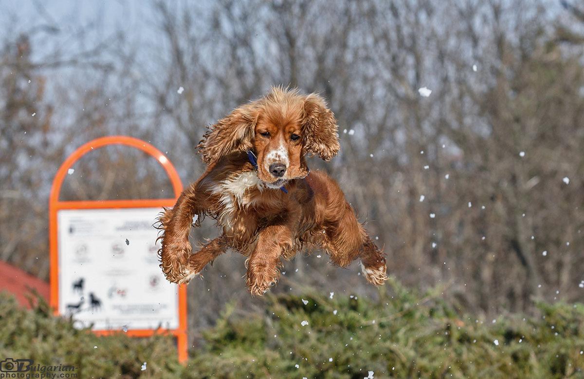 Летящо куче